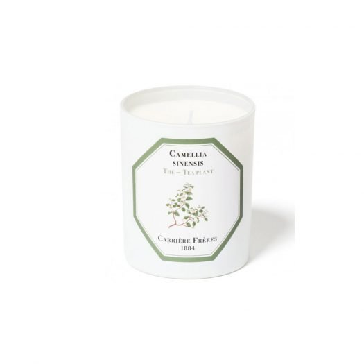 Tea Plant Scented Candle 185 gr