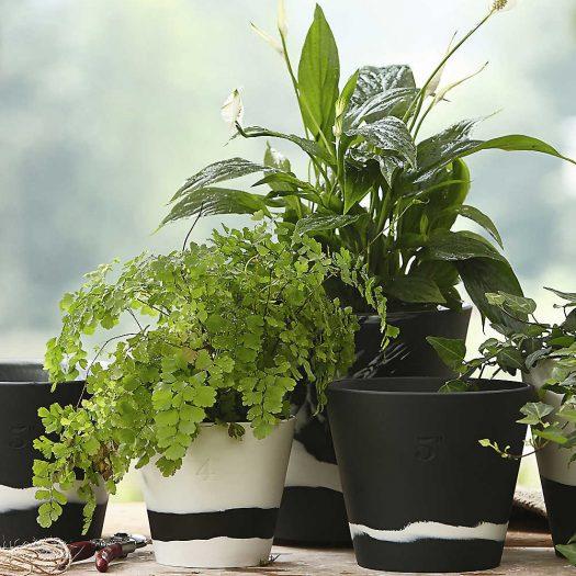 Burlington Jasperware Plant Pot 16.5cm