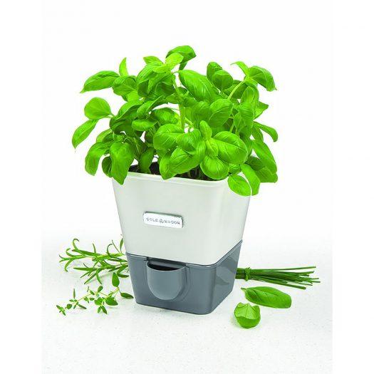 Self Watering Single Potted Herb Keeper