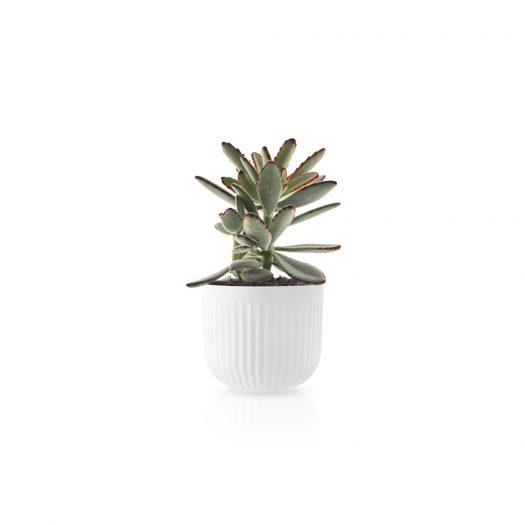 Flowerpot Small Legio Nova