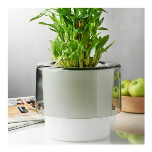 Roots Orchid Pot with Opal White Bottom